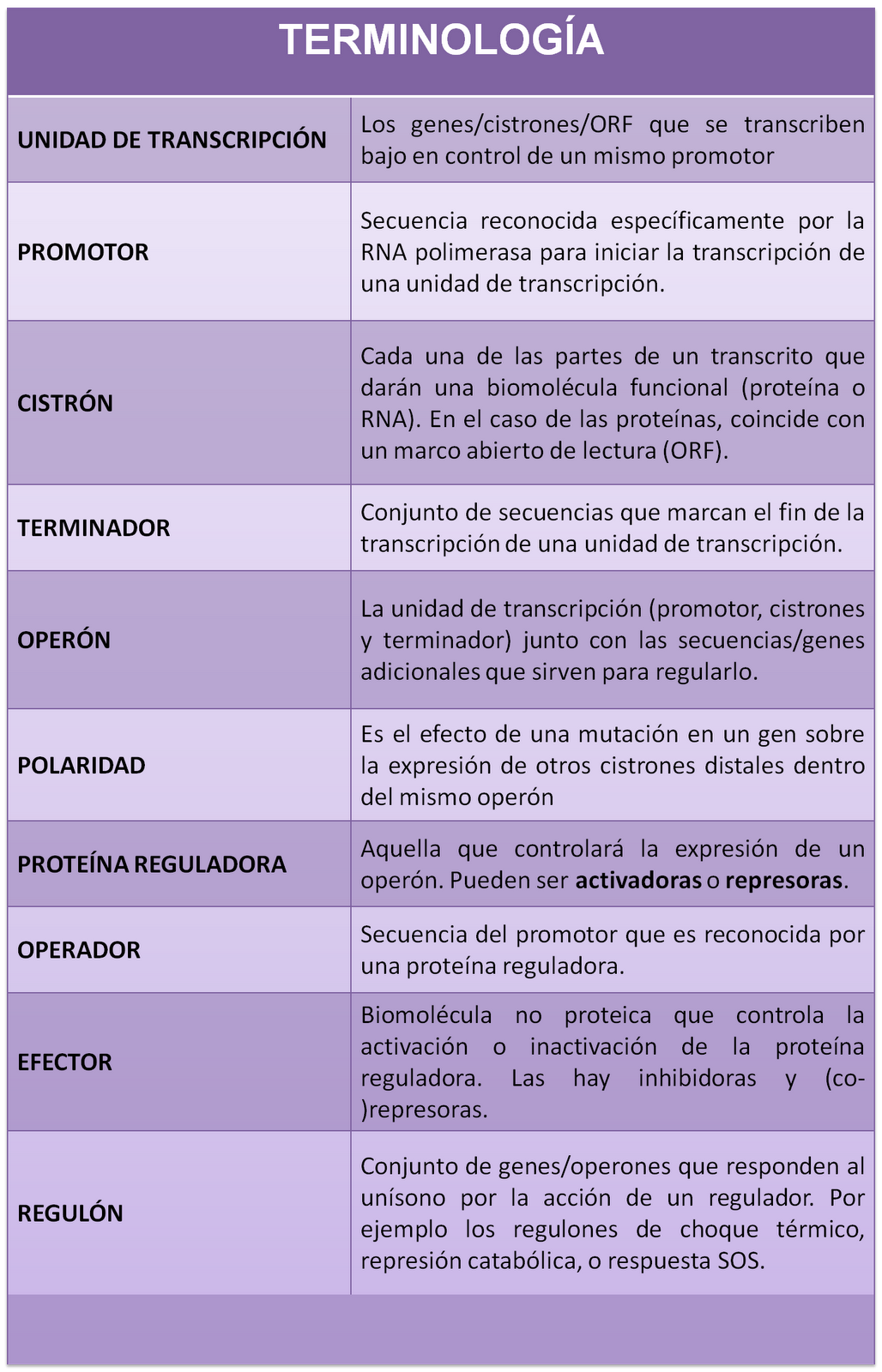 Genética: Regulación de la Transcripción en Organismos Procarióticos
