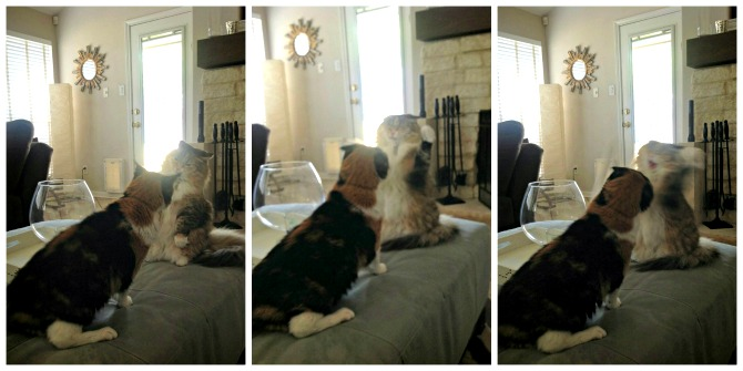 The Holland House: Cat Fight