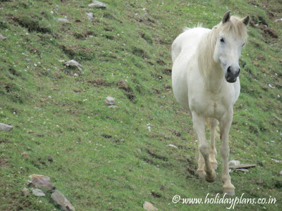 White horses on the hills