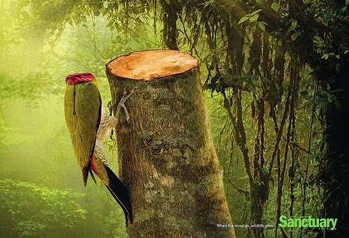 4 Gambar Bermesej Apabila Hutan Musnah, kemusnahan hutan ancam spesies flora dan fauna di hutan, kesan pembalakan haram, penggondolan hutan, penebangan pokok di hutan tanpa kawalan