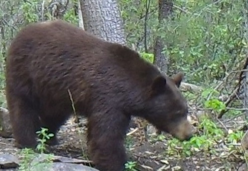 bear+4.png