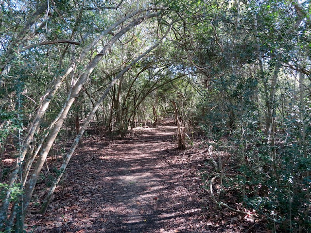 Martyn Trail at Armand Bayou Nature Center.