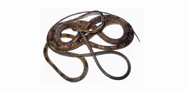 http://asalasah.blogspot.com/2012/12/hewan-yang-berbadan-cacing-berkepala.html