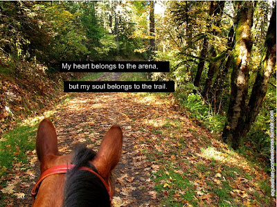 Horse Pictures  Quotes on Arabian Horse Times  Horse Quotes