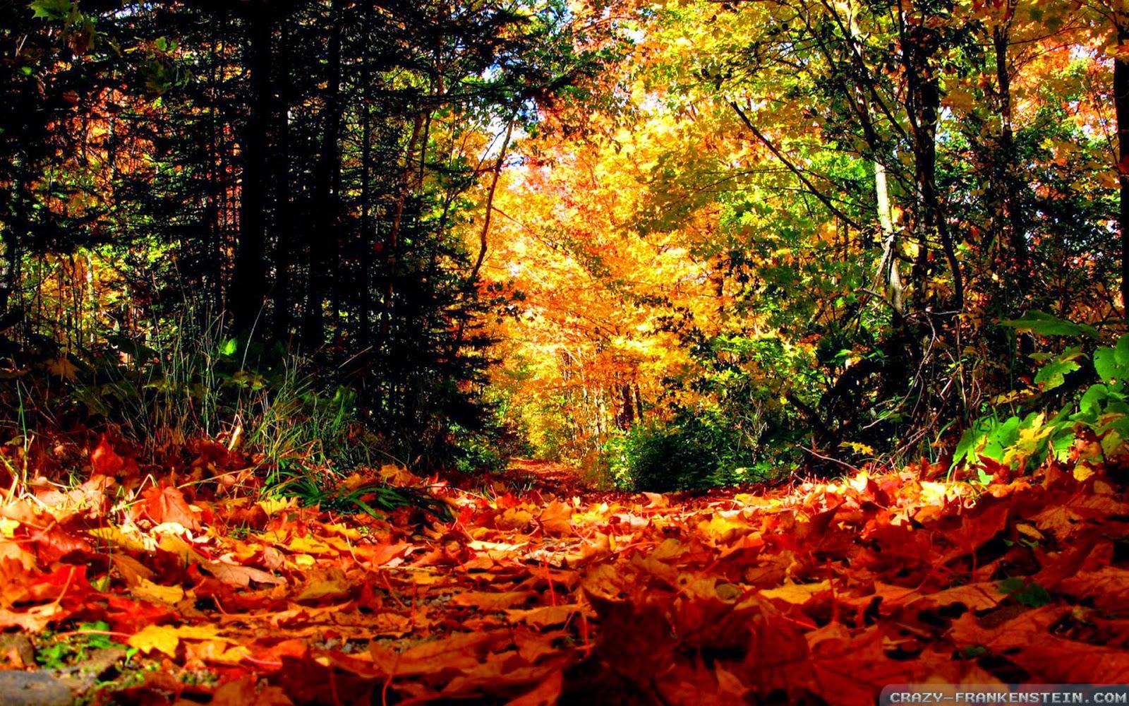 autumn season wallpapers hd - photo #40