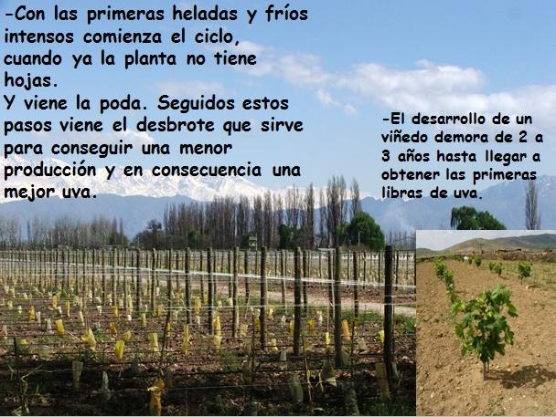 Circuito Productivo Del Vino : Circuito de la vid