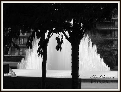 fountain and a tree in black and white