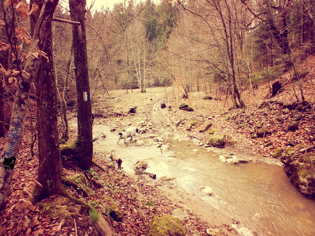 traseu valea poienii aprilie 2013