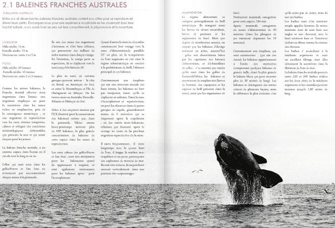 Peninsula Valdes Marine fauna  Guide