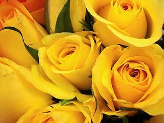 Fotos de Rosas Amarillas, parte 4