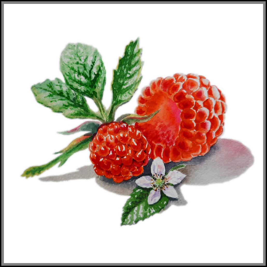 Berry paint