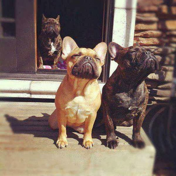 Cute dogs - part 4 (50 pics), dog pictures, dogs enjoy the sunshine