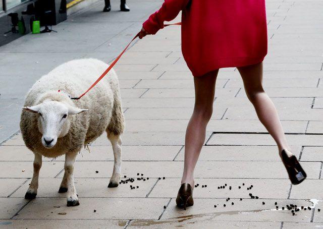 Foto Model Cantik Ini Membawa Domba [ www.BlogApaAja.com ]