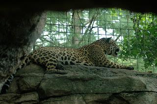 ملف كامل عن اجمل واروع الصور للحيوانات  المفترسة   حيوانات الغابة  1321766915_fbbe6b9e81