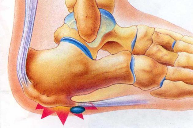 oasele labei piciorului