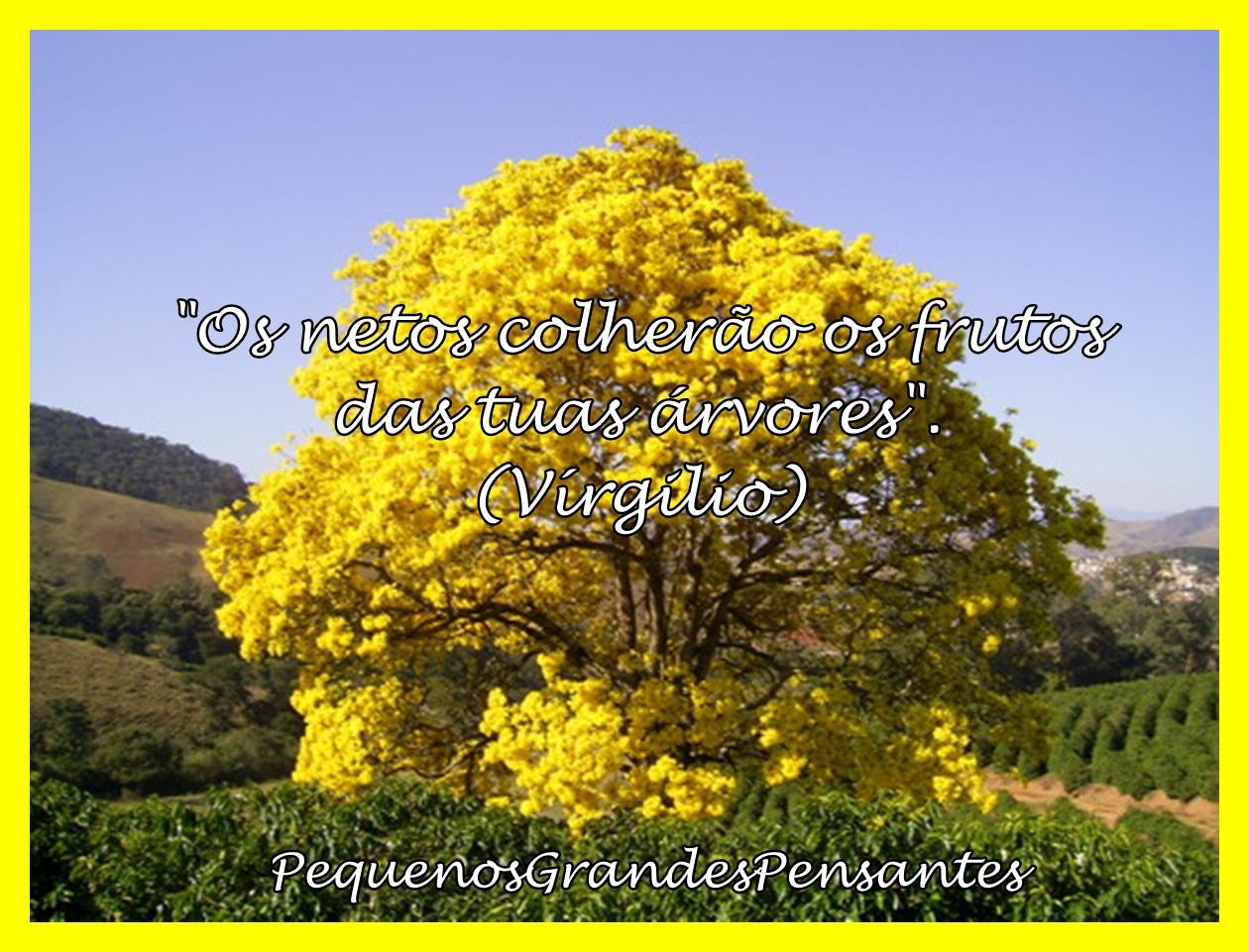 Querida árvore Página 137 Farmerama Pt