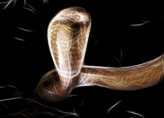 King Cobra Wallpapers
