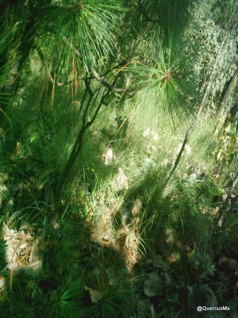 Cerro El Tepopote - Valor biológico y ecológico