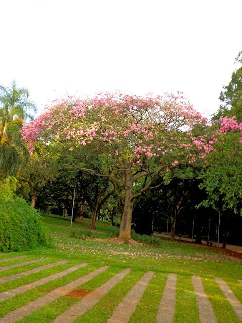 FLORA RICA DO PARQUE IBIRAPUERA