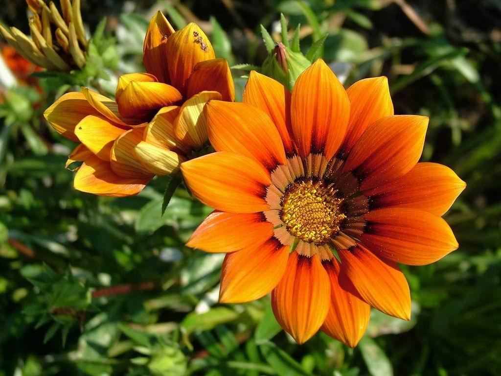 Цветы на даче картинки 3