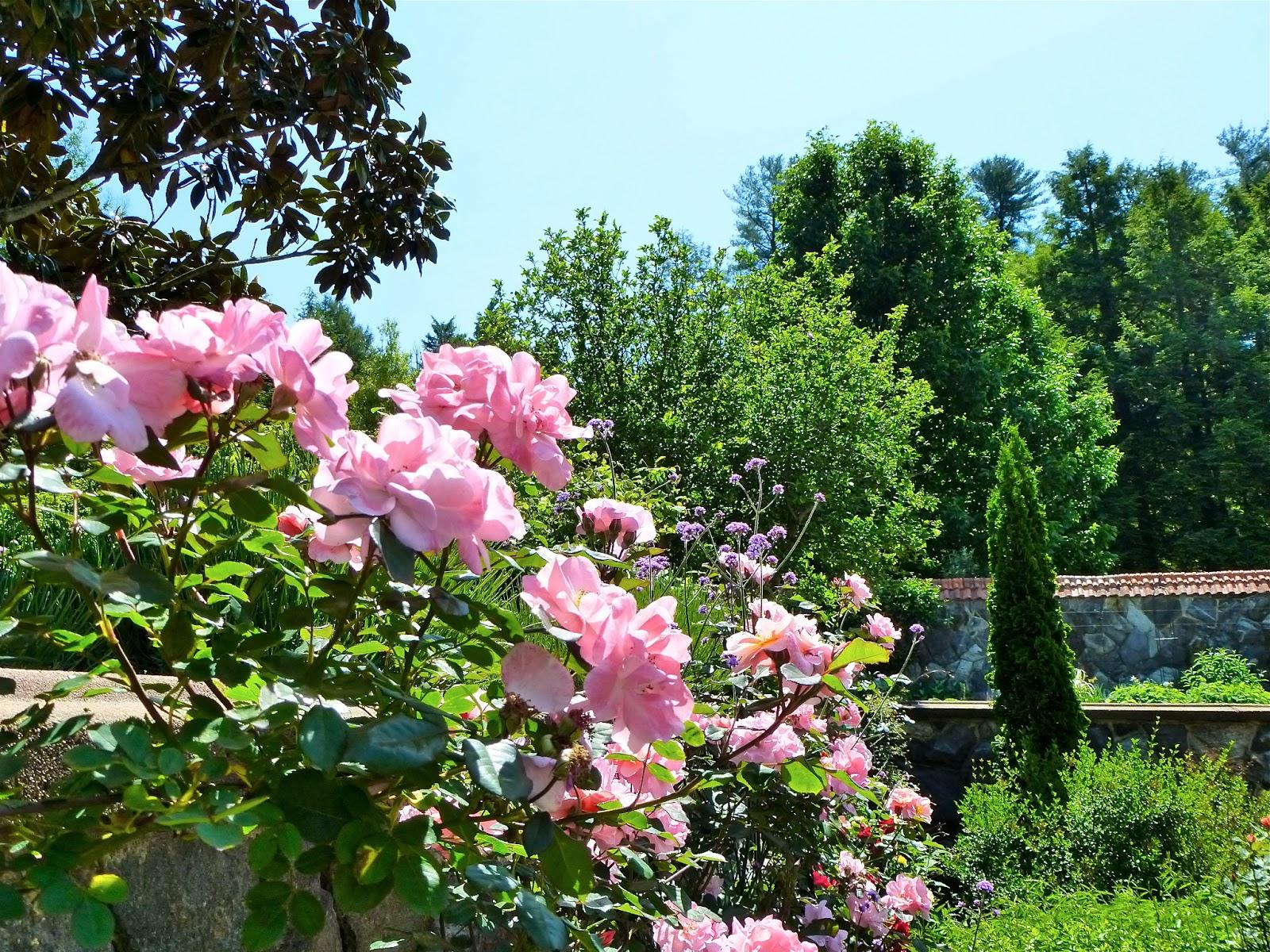Backyard rose garden - Backyard Rose Garden