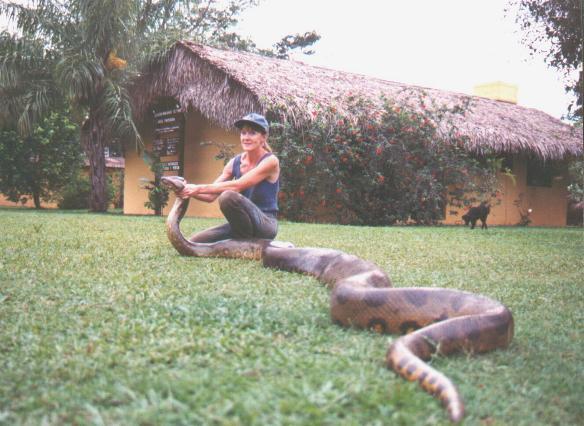 Largest Green Anaconda Snake