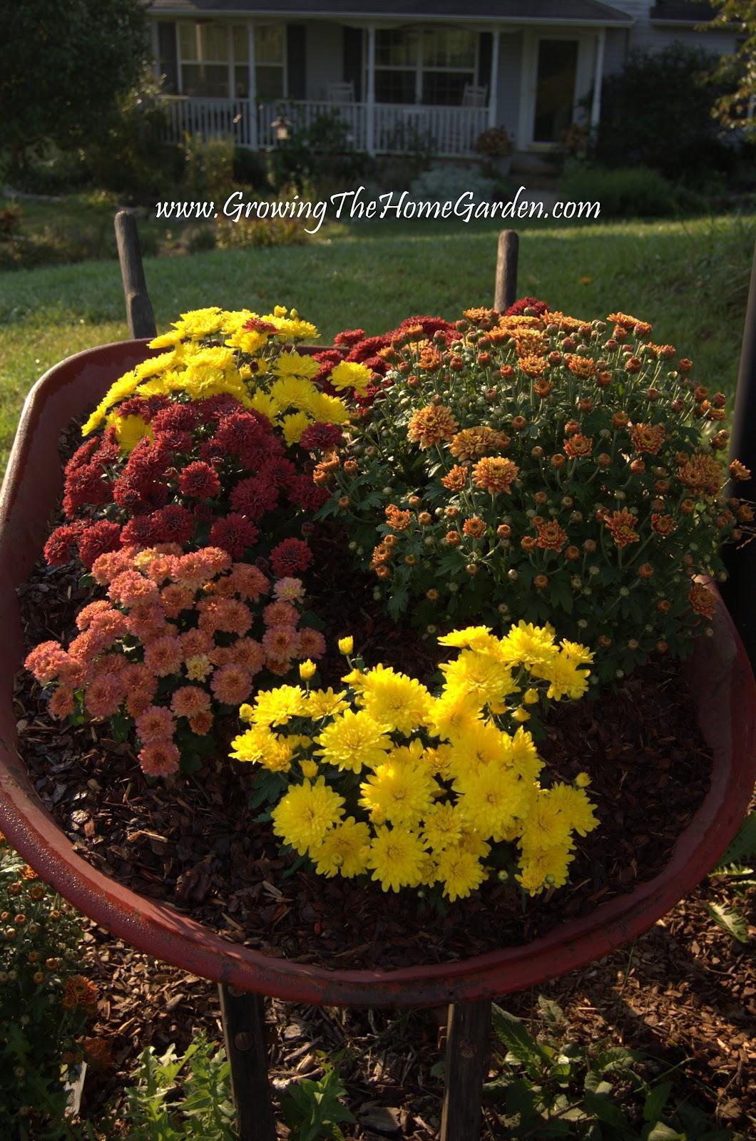 Mums And A Mailbox Garden Meet A Wheelbarrow Growing The