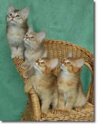 CATVENT CALENDAR: 4 DAYS TO GO UNTIL OUR NEW ASSISTANTS ARRIVE!