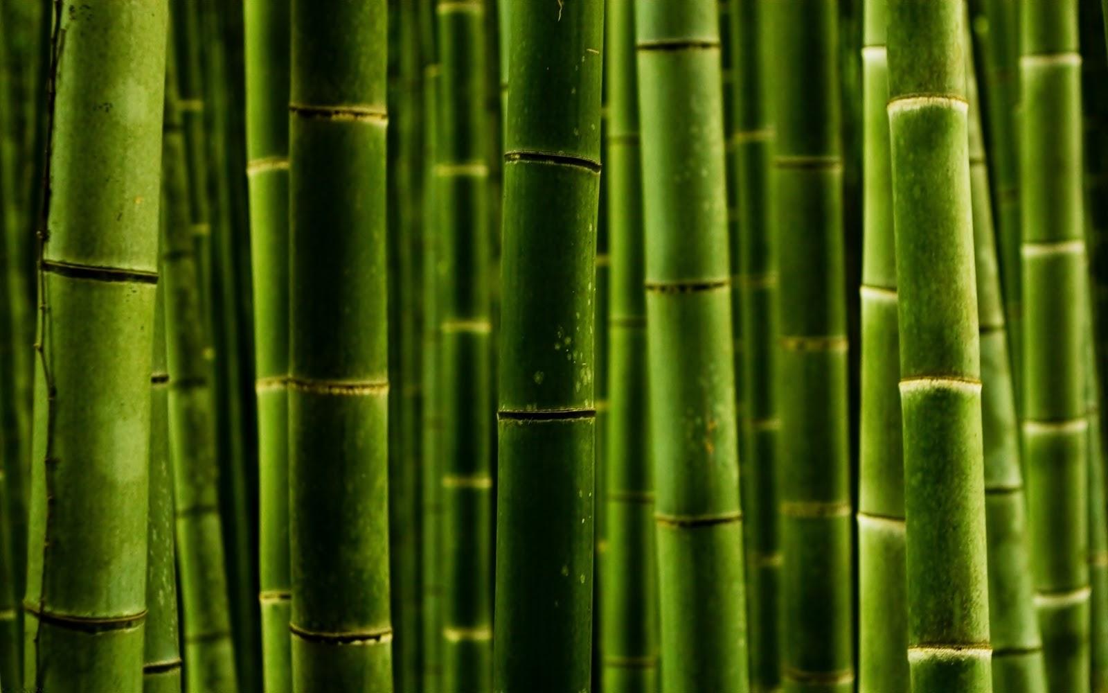 http://4.bp.blogspot.com/-wbPLQ2xgmZ4/TqGElCL_LMI/AAAAAAAAD1I/zOZYMt3E360/s1600/bambus.jpg