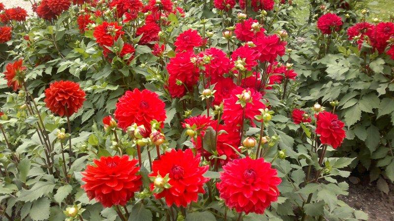 Welche Blumen Bl Hen Im September blumen im juni blumen heidi schade fotografie es bl ht in unserem garten der juni in blumen
