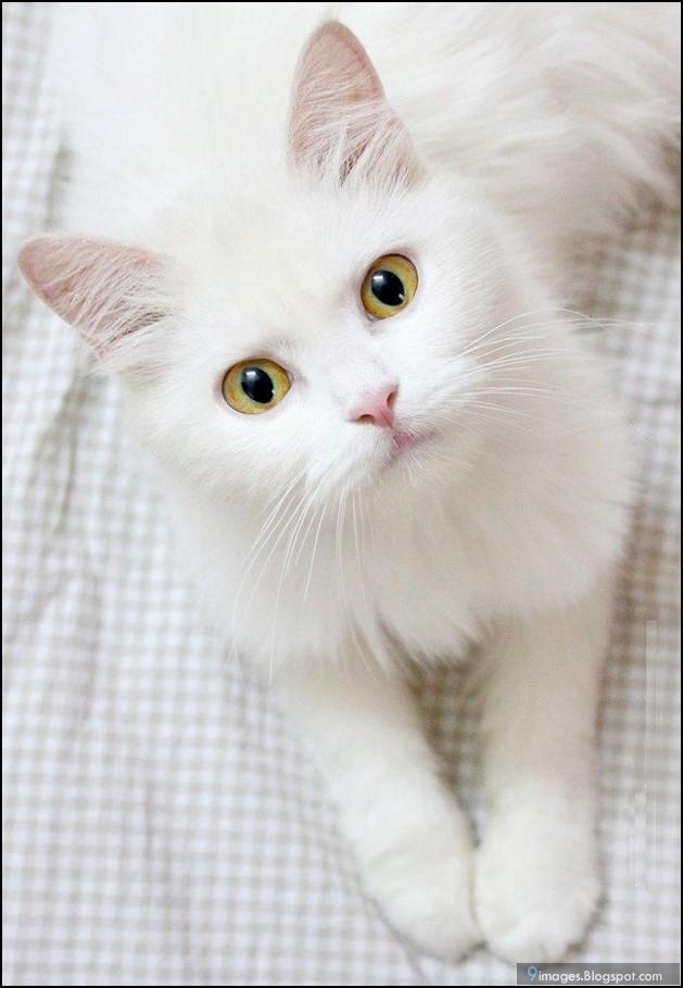 Cat Meow Collar