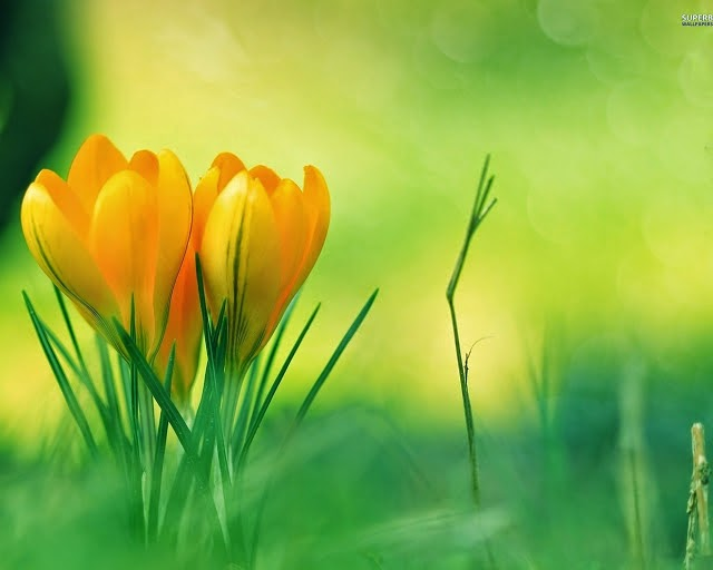 most beautiful flower wallpapers worldhttprefreshrose