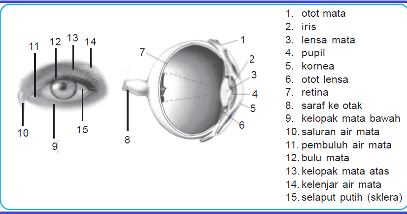 Belajar Kurikulum 2013 Alat Alat Optik