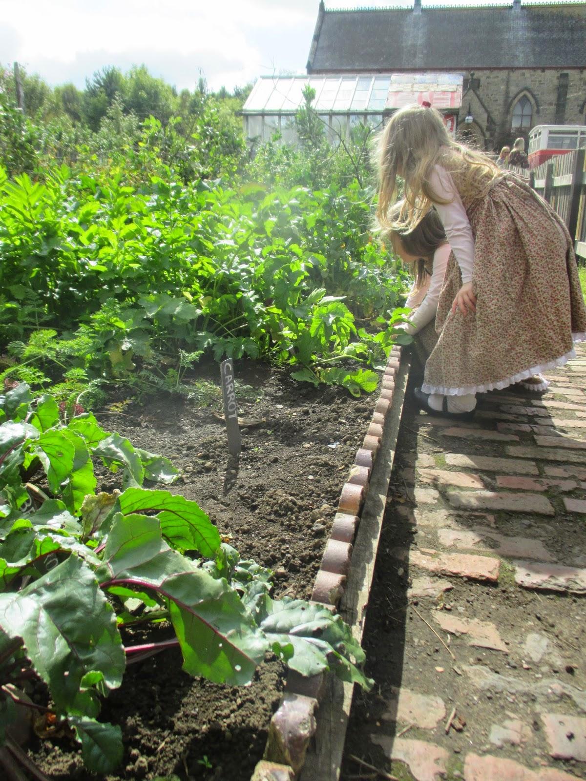 Wartime Kitchen Garden Dvd Remembering The Old Ways 2014 08 31