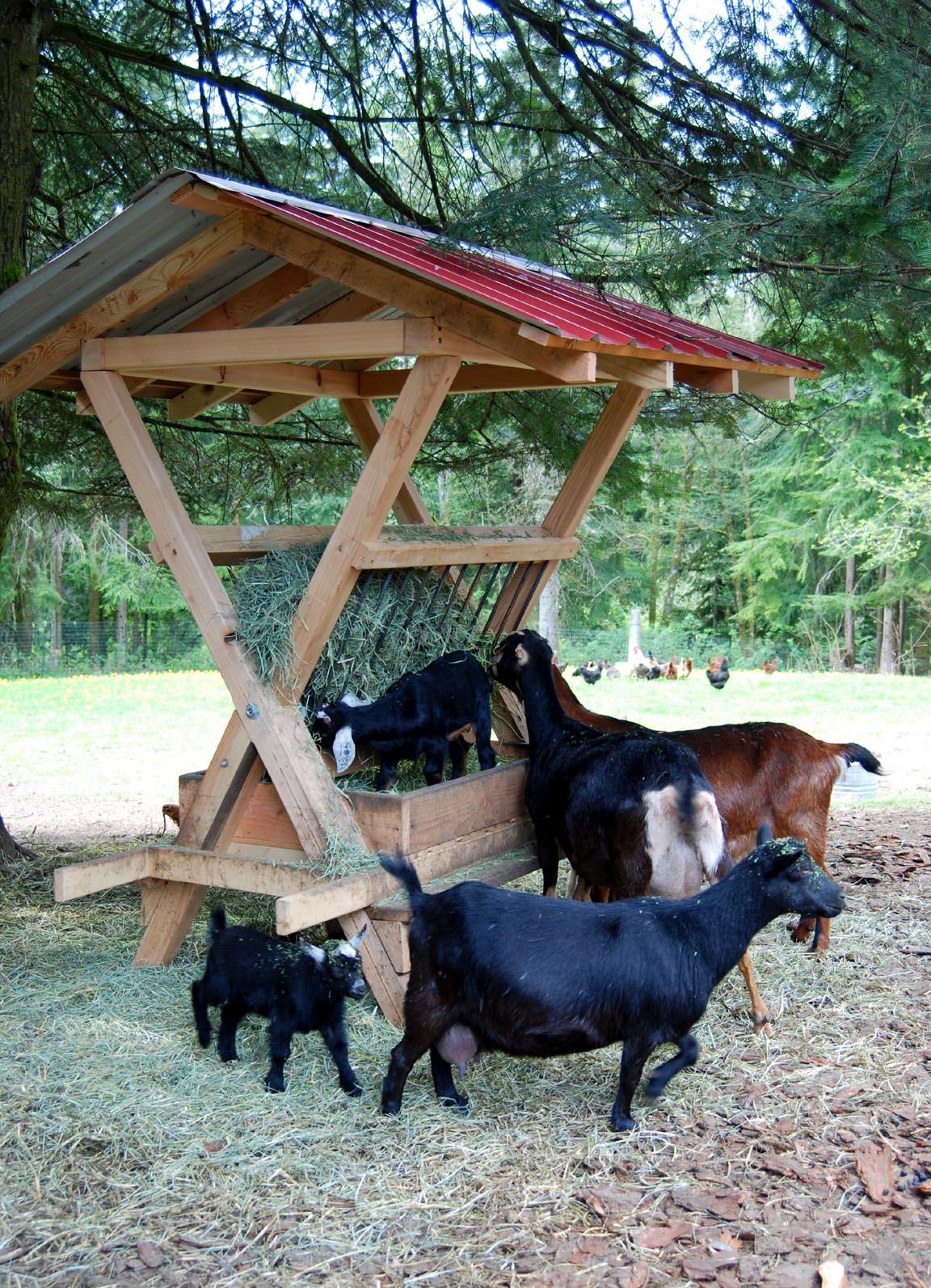 Applegarth farm the spring goat menagerie