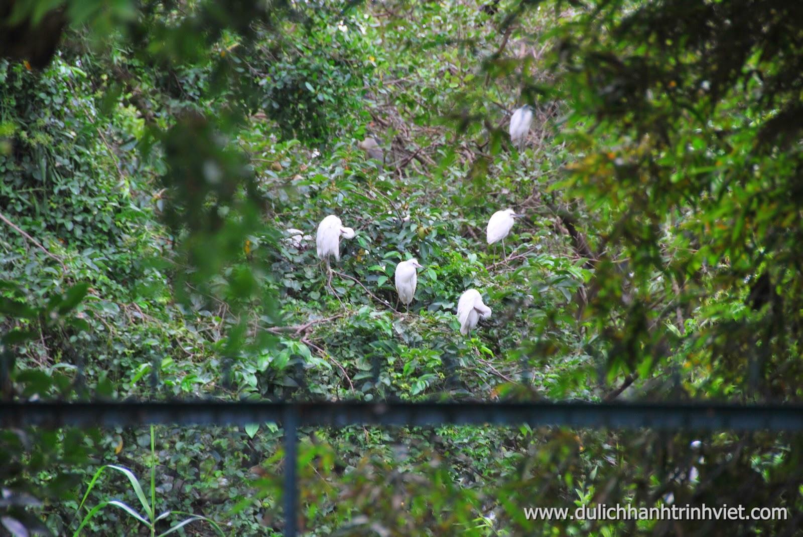Ngắm cò về tổ ở Lâm Viên Cà Mau 2014