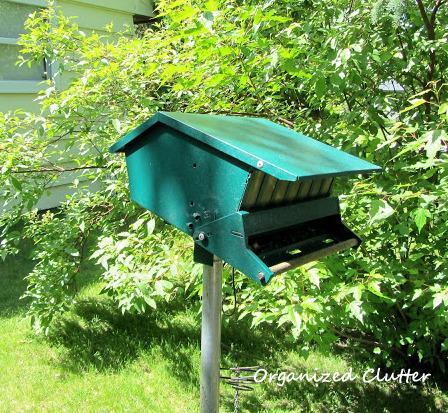 Squirrel proof feeder?  Not!