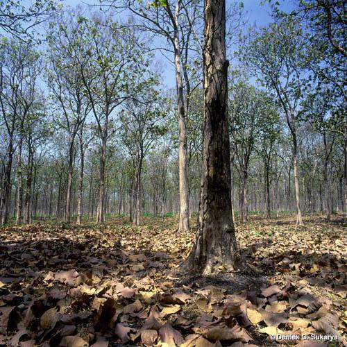 Hutan hujan tropis, Terdapat di daerah dengan curah hujan dan suhu