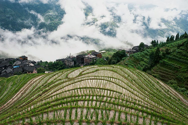 Rice Terrace, Guilin China