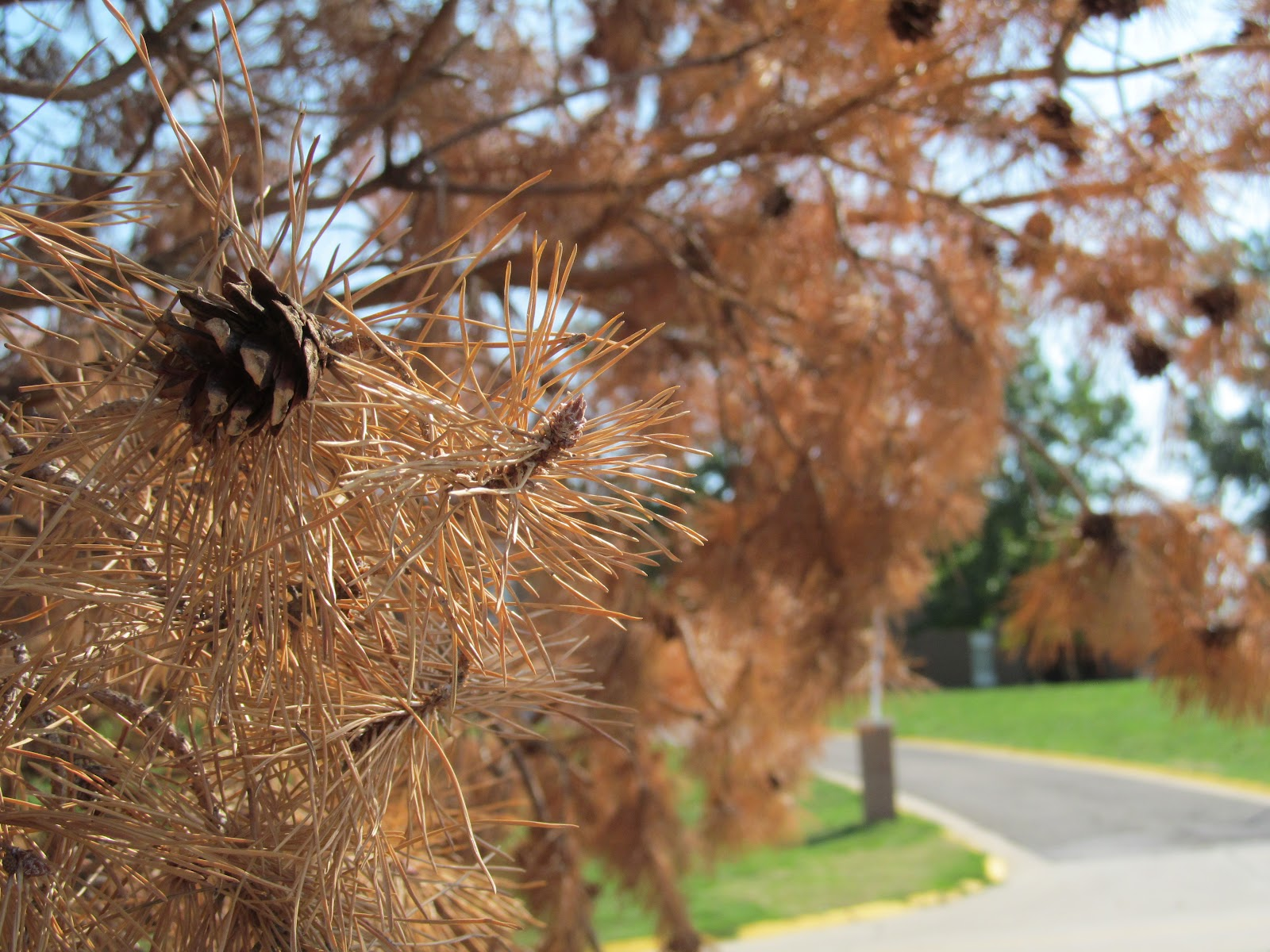 Landscaping With Native Plants : Explore missouri landscaping with native plants