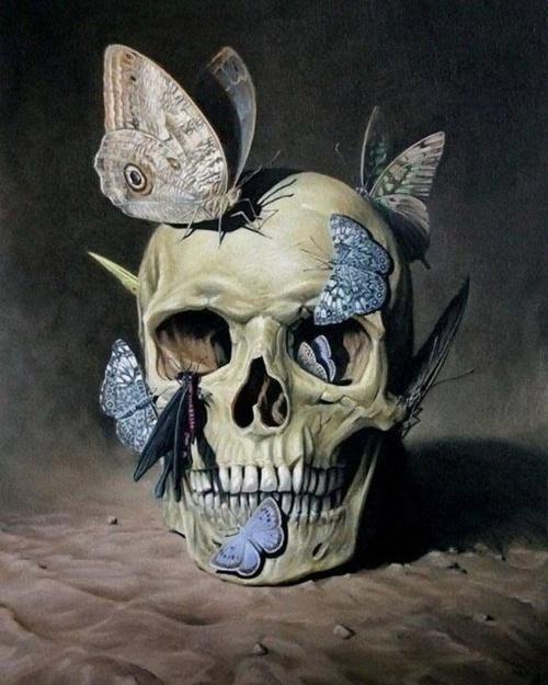 Gammelt vanitas maleri med kranium og sommerfugle