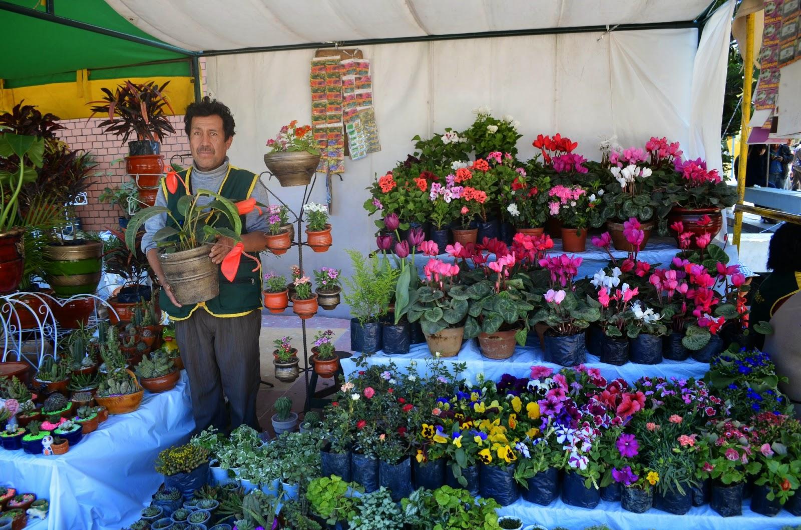 Agro jun n m s de 100 especies de flores presentan en for Especies de plantas ornamentales