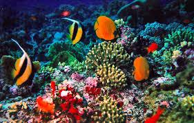 Persebaran Sumber Daya Alam Wilayah Perairan di Indonesia