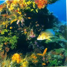 eksploitasi terumbu karang