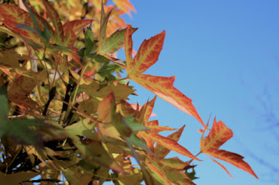"""<img src=""""autumn-colour2.jpg"""" alt=""""Autumn Colour"""" />"""