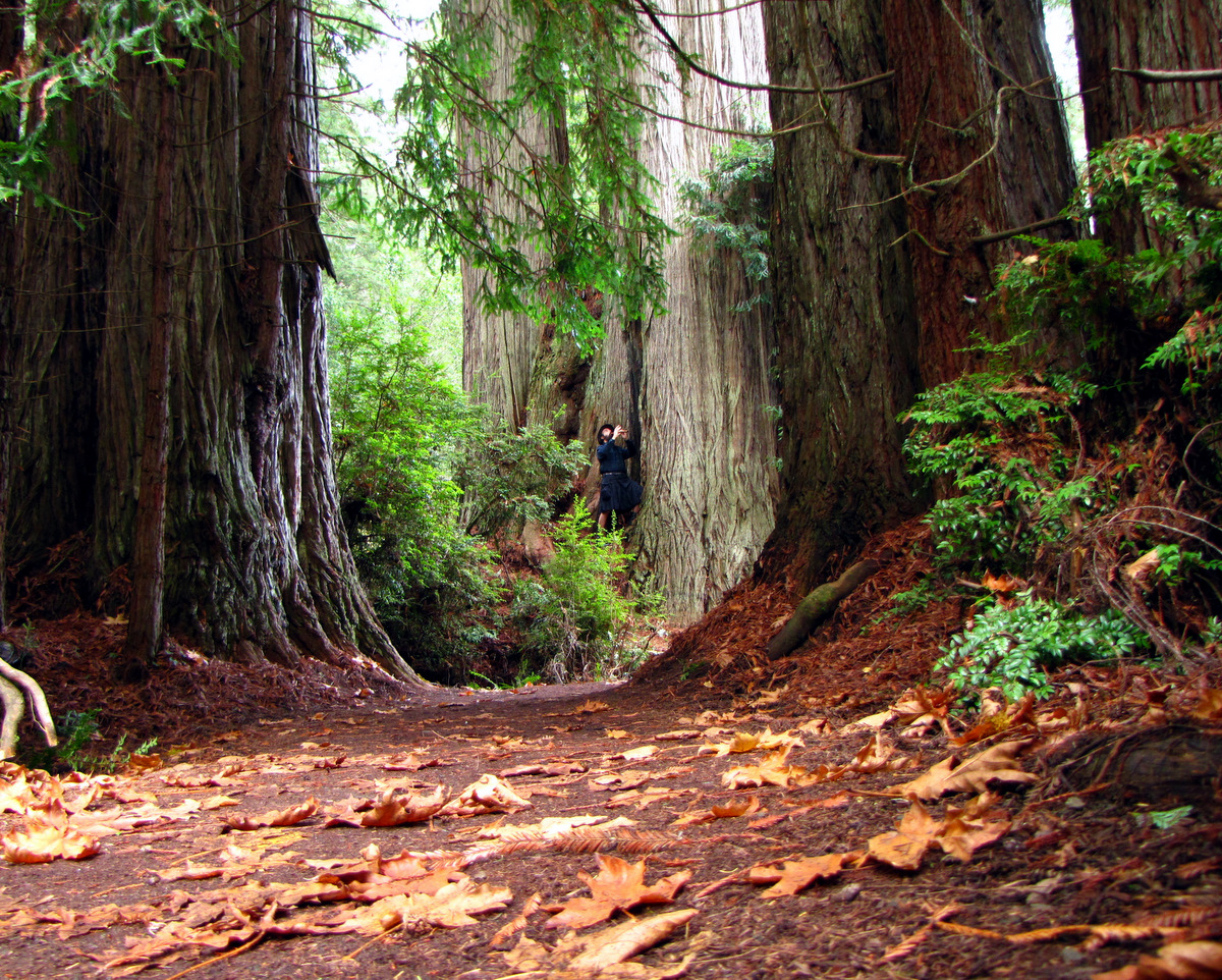 redwood national park Check out 8 amazing places to see redwood trees in  on an easy 24-kilometer hike to the spot where lady bird johnson dedicated redwood national park in.