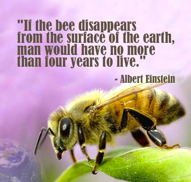 bees disappearance essay A) did you ever wonder where the bees were this summer did you perhaps see any bees at all this summer the distinction of bees has been a rising issue that is getting attention from farmers, bee keepers, and large corporations investing in farms honey bees are a very important component to.