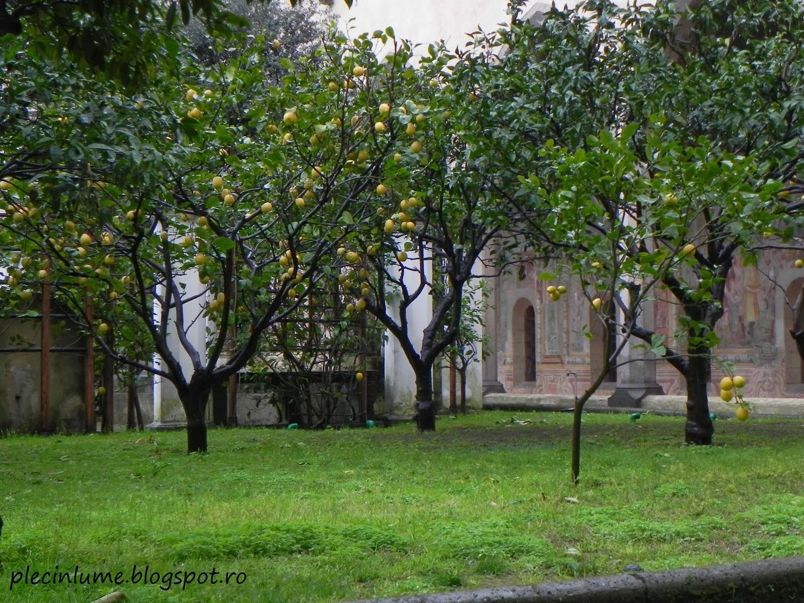Gradina de lamai si portocali in Napoli
