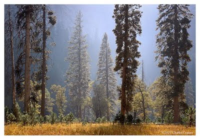 El Capitan Meadow, Autumn, Yosemite