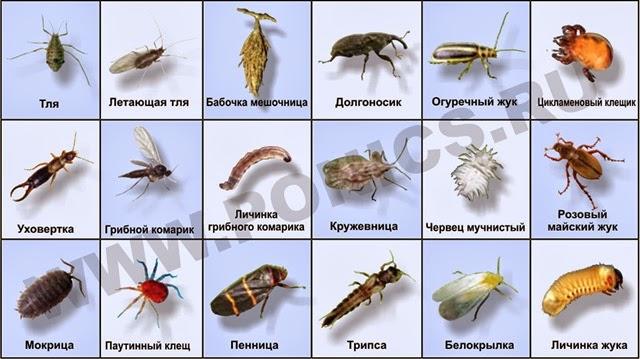 Башкирские народные инструменты презентация